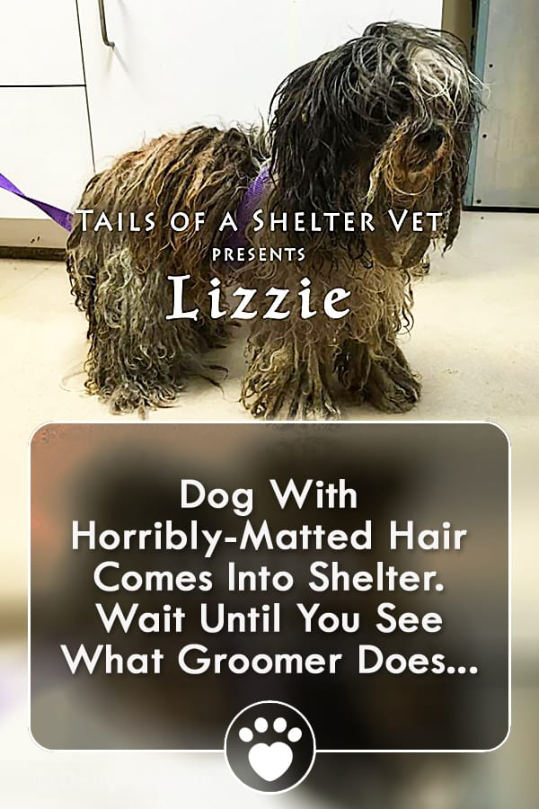 Dog With Horribly-Matted Hair Comes Into Shelter. Wait Until You See What Groomer Does...