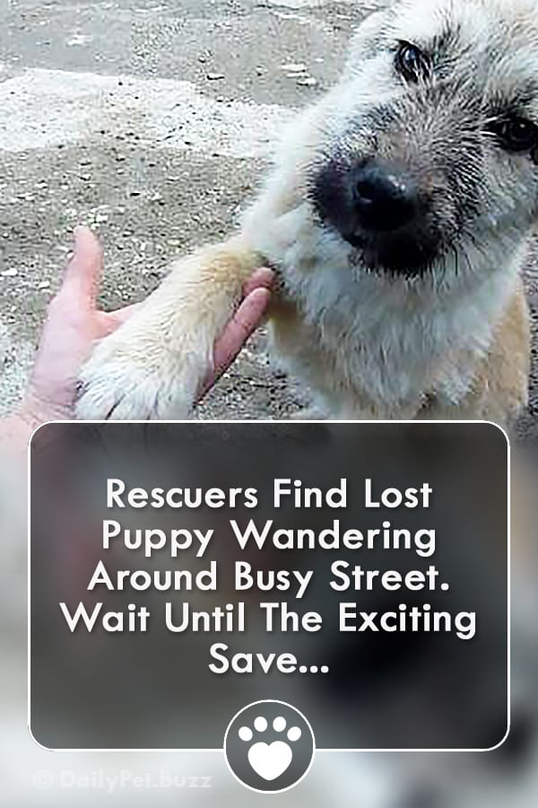 Rescuers Find Lost Puppy Wandering Around Busy Street. Wait Until The Exciting Save...