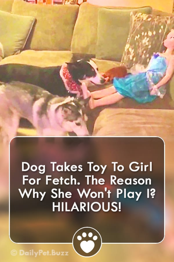 Dog Takes Toy To Girl For Fetch. The Reason Why She Won\'t Play I? HILARIOUS!