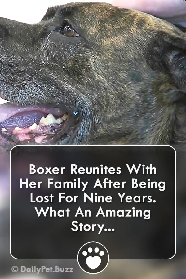 Boxer Reunites With Her Family After Being Lost For Nine Years. What An Amazing Story...