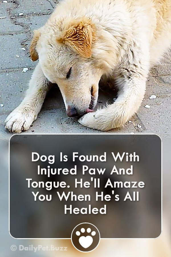 Dog Is Found With Injured Paw And Tongue. He\'ll Amaze You When He\'s All Healed
