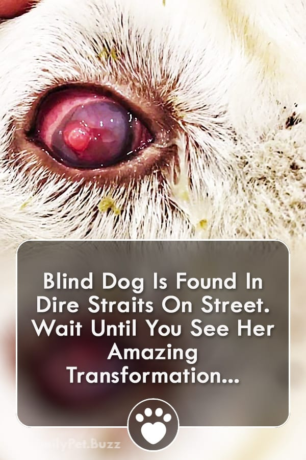 Blind Dog Is Found In Dire Straits On Street. Wait Until You See Her Amazing Transformation...