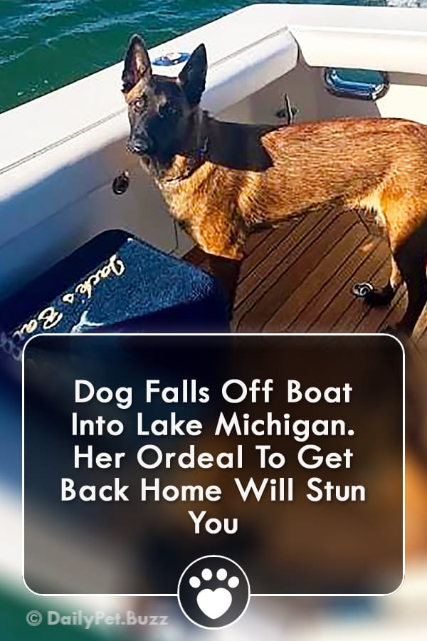 Dog Falls Off Boat Into Lake Michigan. Her Ordeal To Get Back Home Will Stun You