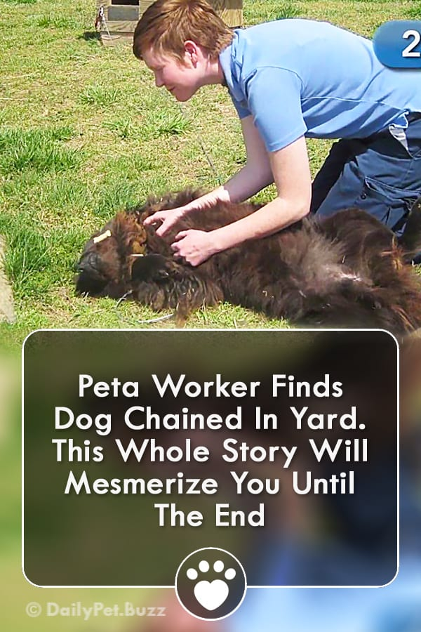Peta Worker Finds Dog Chained In Yard. This Whole Story Will Mesmerize You Until The End
