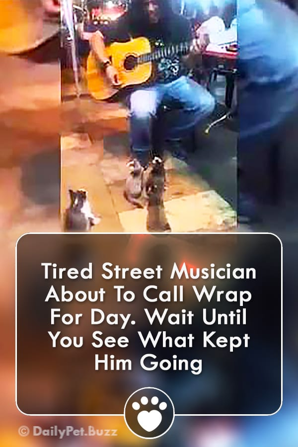 Tired Street Musician About To Call Wrap For Day. Wait Until You See What Kept Him Going