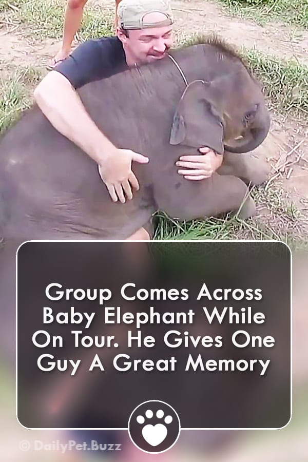 Group Comes Across Baby Elephant While On Tour. He Gives One Guy A Great Memory