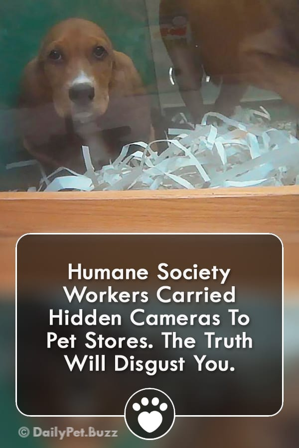 Humane Society Workers Carried Hidden Cameras To Pet Stores. The Truth Will Disgust You.