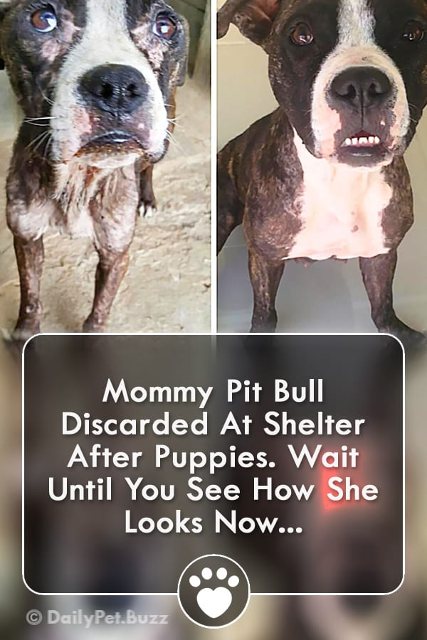 Mommy Pit Bull Discarded At Shelter After Puppies. Wait Until You See How She Looks Now...