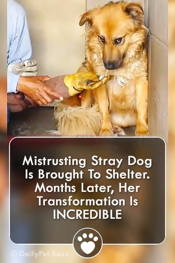 Mistrusting Stray Dog Is Brought To Shelter. Months Later, Her Transformation Is INCREDIBLE