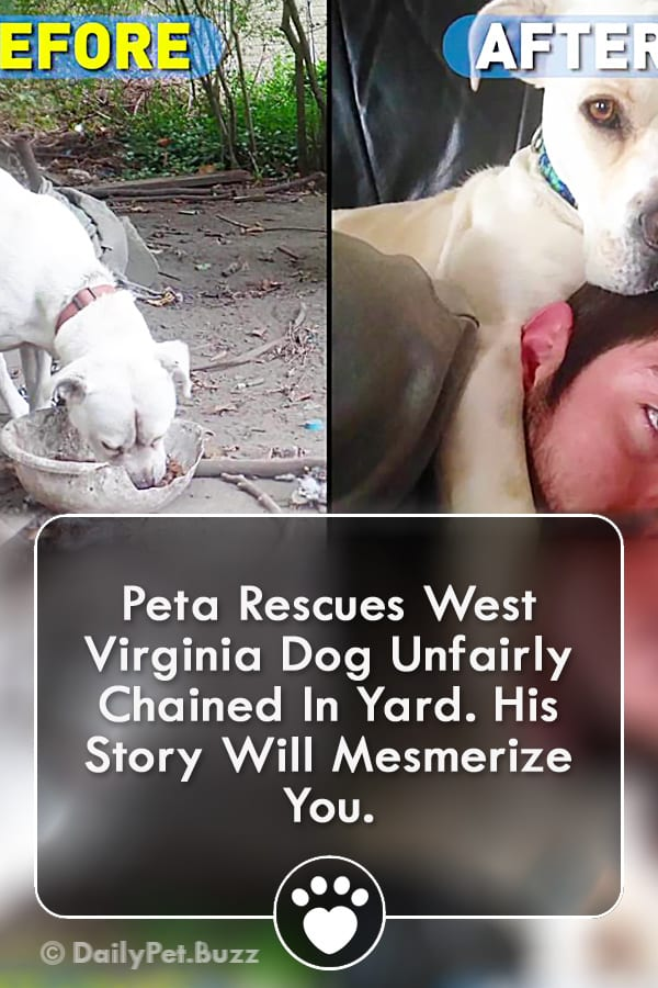 Peta Rescues West Virginia Dog Unfairly Chained In Yard. His Story Will Mesmerize You.