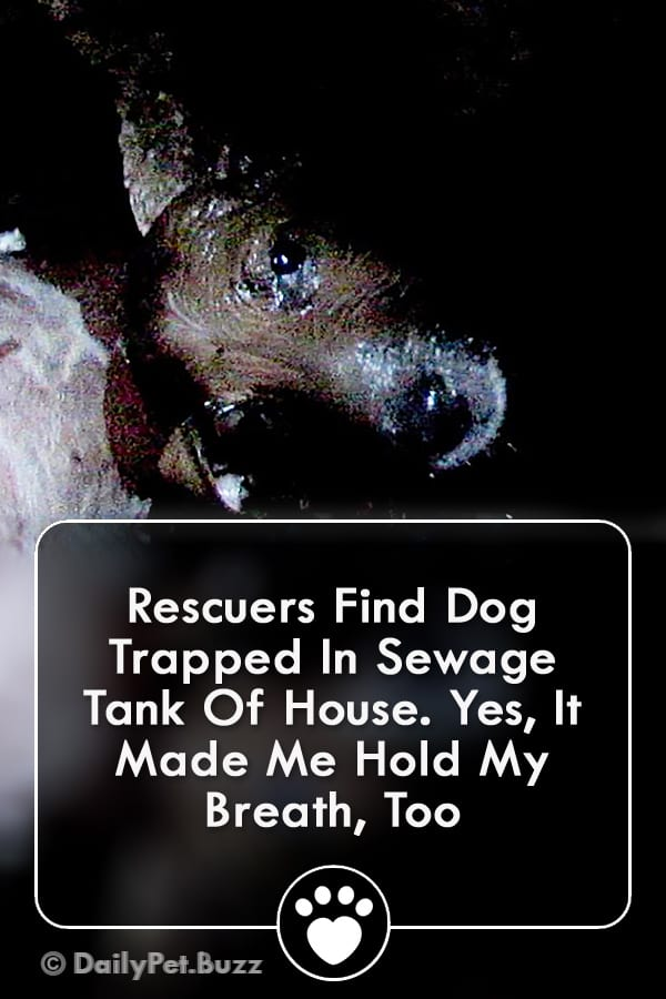 Rescuers Find Dog Trapped In Sewage Tank Of House. Yes, It Made Me Hold My Breath, Too