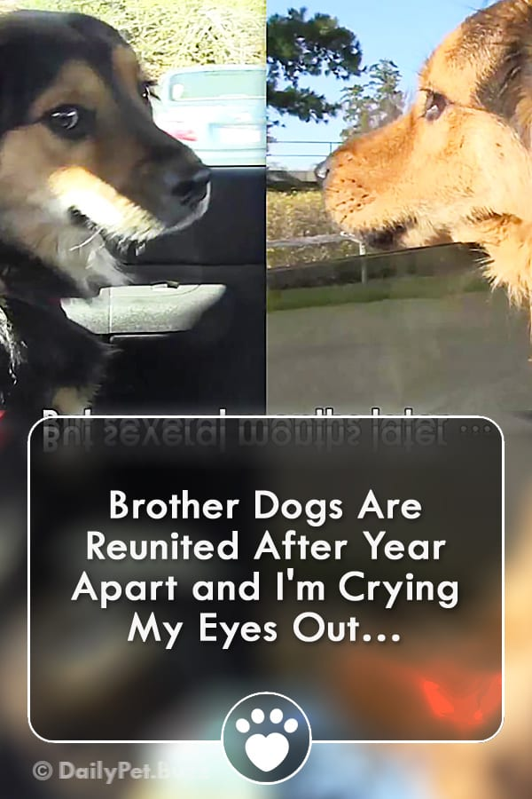 Brother Dogs Are Reunited After Year Apart and I\'m Crying My Eyes Out…