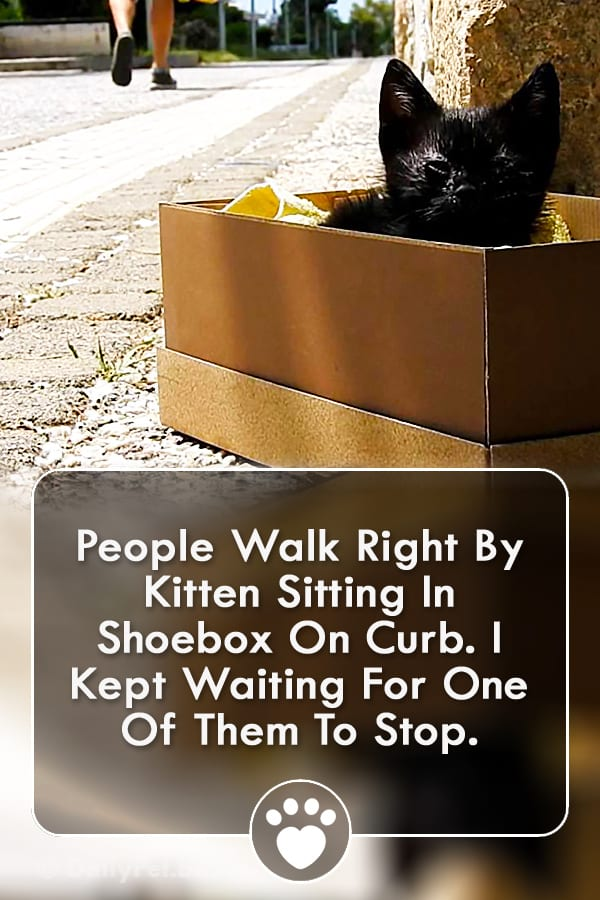 People Walk Right By Kitten Sitting In Shoebox On Curb. I Kept Waiting For One Of Them To Stop.