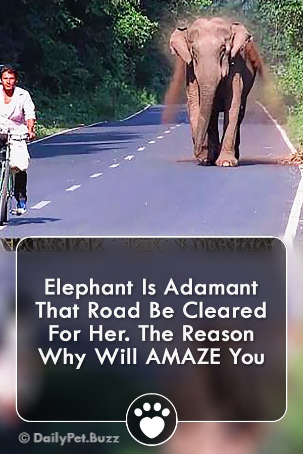 Elephant Is Adamant That Road Be Cleared For Her. The Reason Why Will AMAZE You