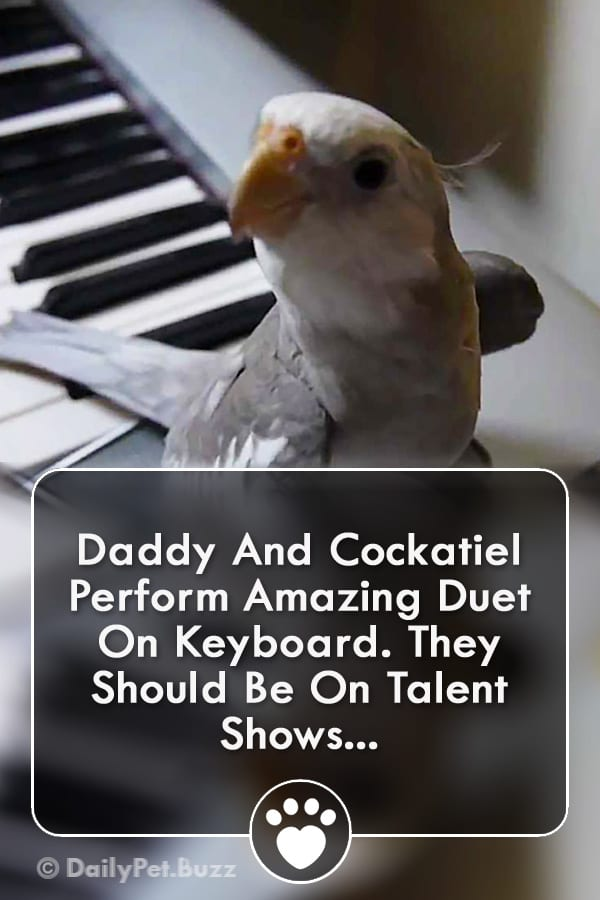Daddy And Cockatiel Perform Amazing Duet On Keyboard. They Should Be On Talent Shows...