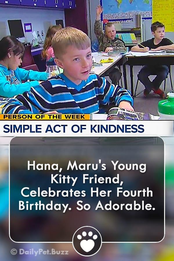 Hana, Maru\'s Young Kitty Friend, Celebrates Her Fourth Birthday. So Adorable.
