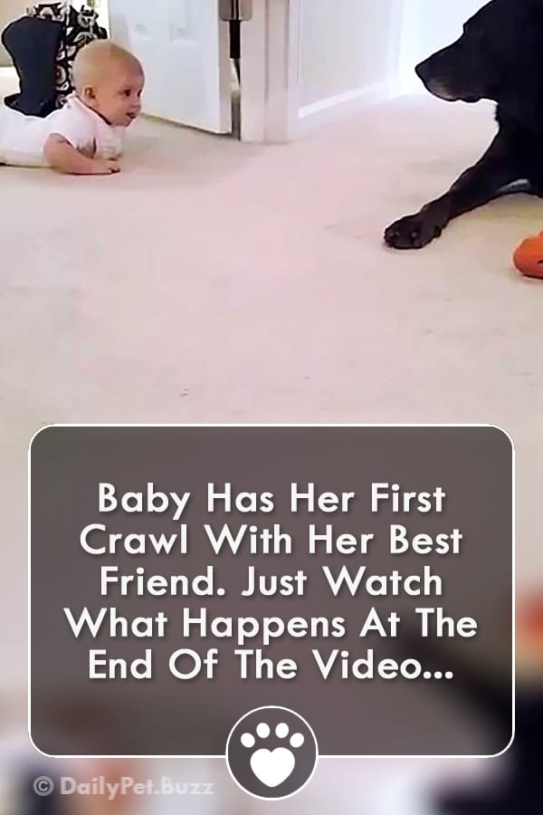 Baby Has Her First Crawl With Her Best Friend. Just Watch What Happens At The End Of The Video...