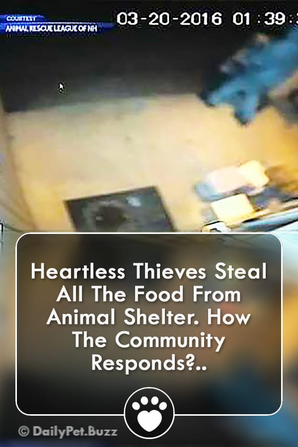 Heartless Thieves Steal All The Food From Animal Shelter. How The Community Responds?..