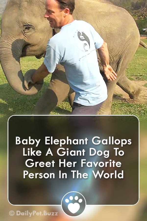 Baby Elephant Gallops Like A Giant Dog To Greet Her Favorite Person In The World