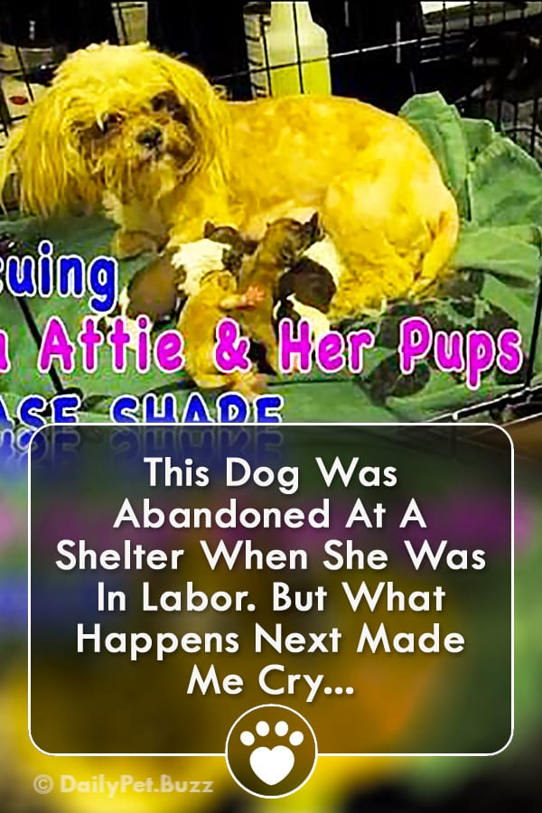This Dog Was Abandoned At A Shelter When She Was In Labor. But What Happens Next Made Me Cry...