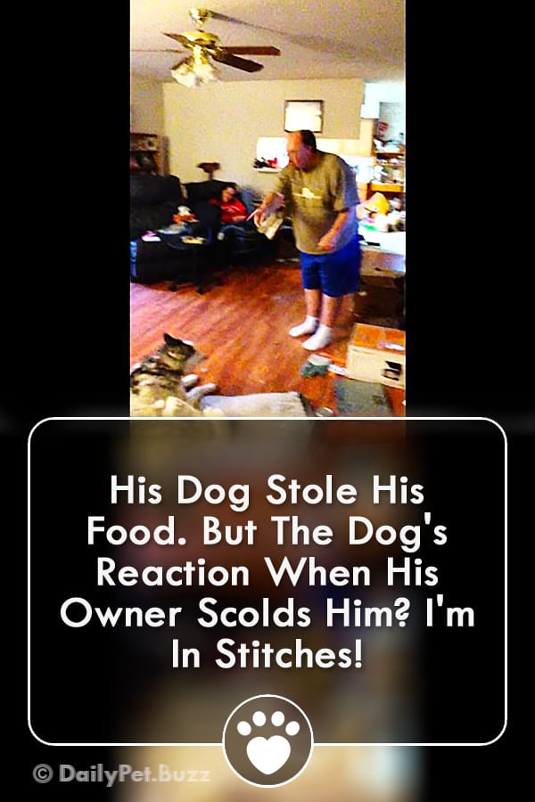 His Dog Stole His Food. But The Dog\'s Reaction When His Owner Scolds Him? I\'m In Stitches!