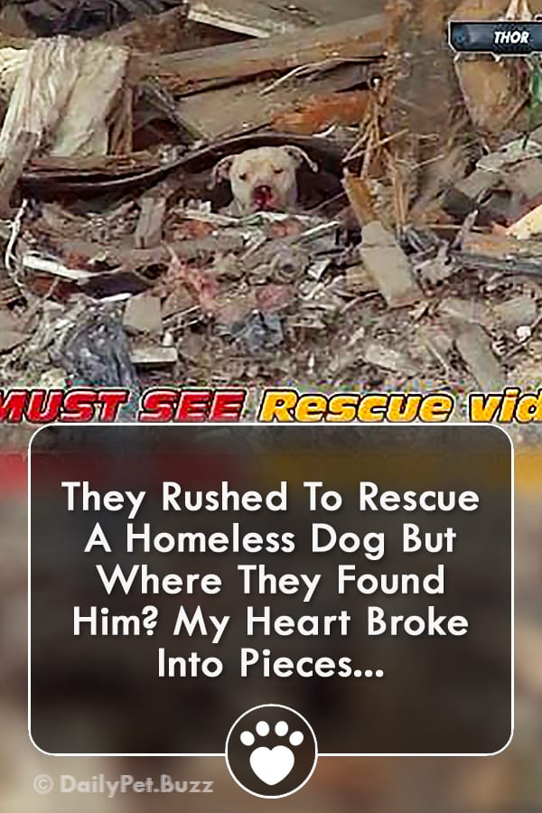 They Rushed To Rescue A Homeless Dog But Where They Found Him? My Heart Broke Into Pieces...