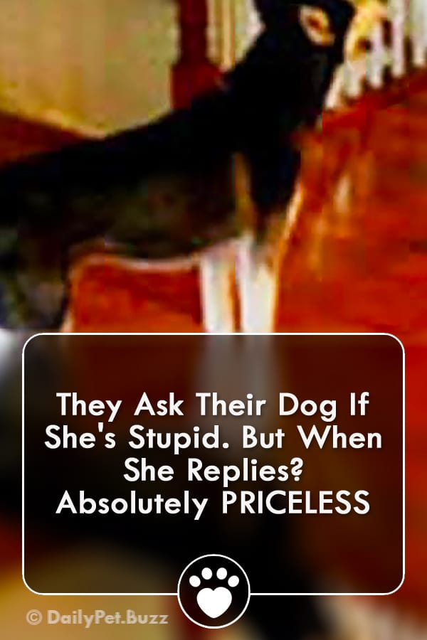 They Ask Their Dog If She\'s Stupid. But When She Replies? Absolutely PRICELESS