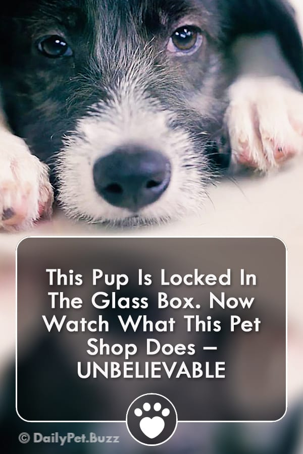 This Pup Is Locked In The Glass Box. Now Watch What This Pet Shop Does – UNBELIEVABLE