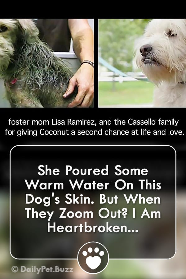 She Poured Some Warm Water On This Dog\'s Skin. But When They Zoom Out? I Am Heartbroken...