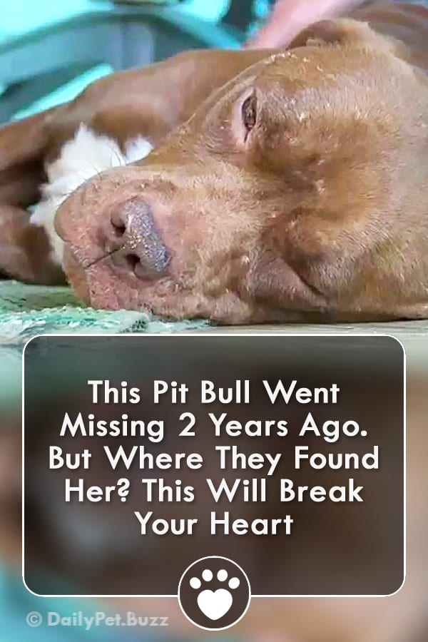 This Pit Bull Went Missing 2 Years Ago. But Where They Found Her? This Will Break Your Heart