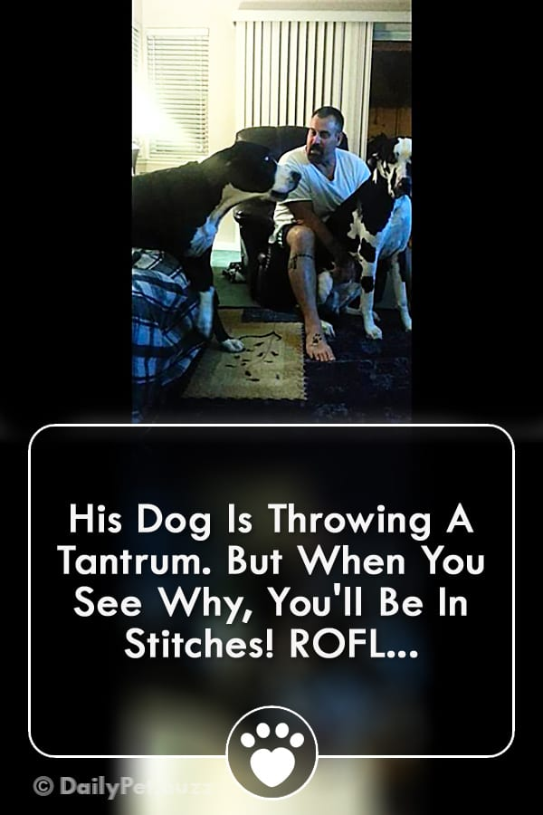 His Dog Is Throwing A Tantrum. But When You See Why, You\'ll Be In Stitches! ROFL...