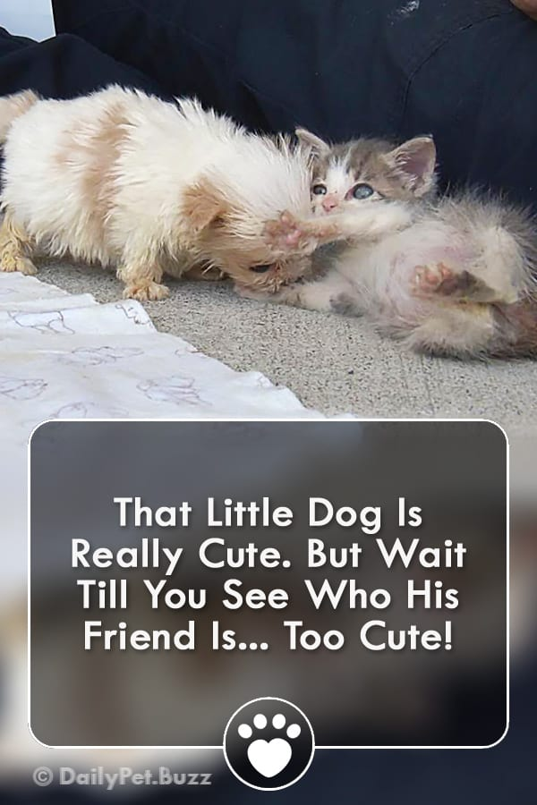 That Little Dog Is Really Cute. But Wait Till You See Who His Friend Is... Too Cute!