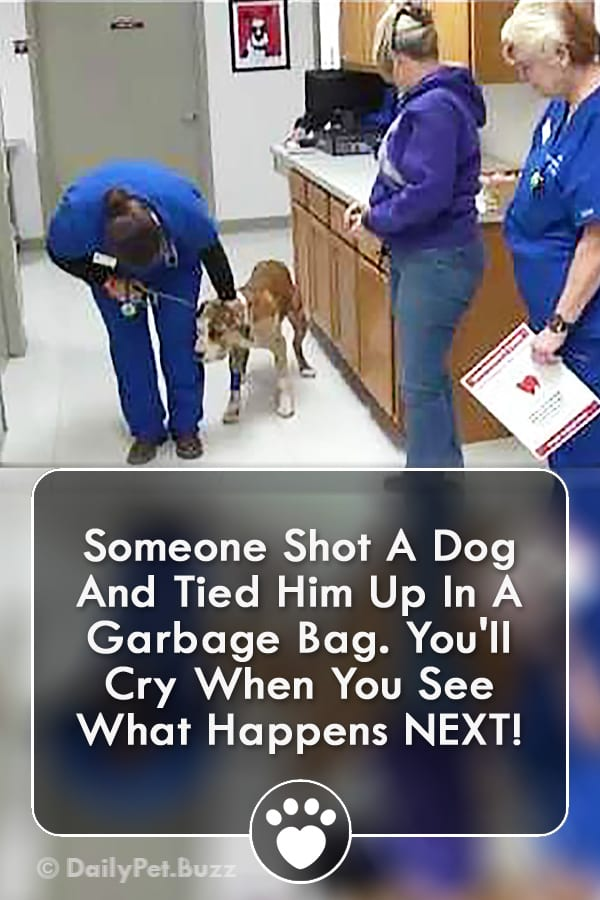 Someone Shot A Dog And Tied Him Up In A Garbage Bag. You\'ll Cry When You See What Happens NEXT!