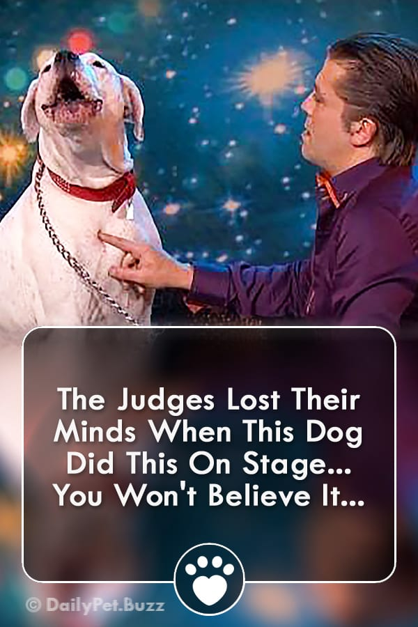 The Judges Lost Their Minds When This Dog Did This On Stage... You Won\'t Believe It...