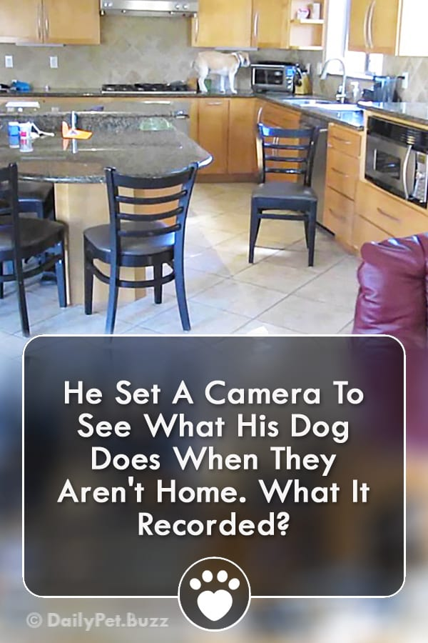 He Set A Camera To See What His Dog Does When They Aren\'t Home. What It Recorded?