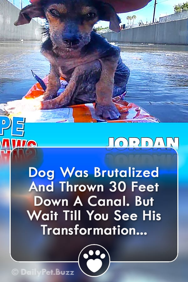 Dog Was Brutalized And Thrown 30 Feet Down A Canal. But Wait Till You See His Transformation...