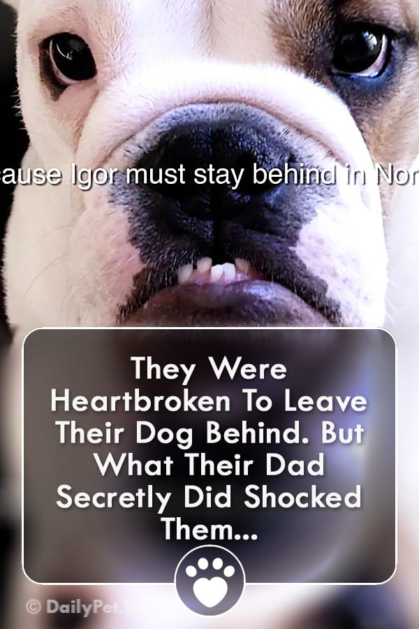 They Were Heartbroken To Leave Their Dog Behind. But What Their Dad Secretly Did Shocked Them...