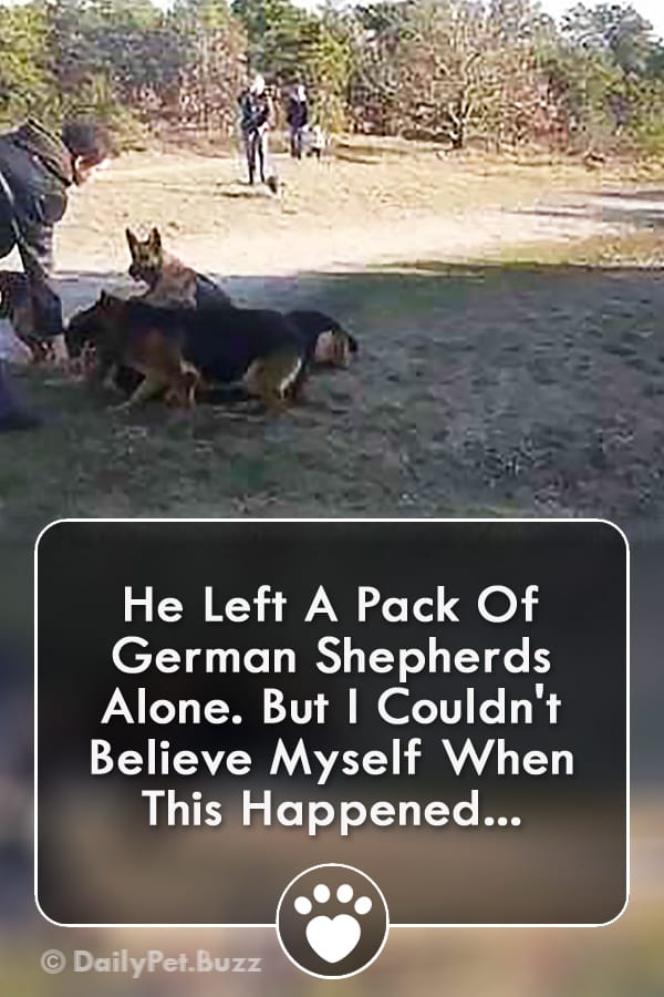 He Left A Pack Of German Shepherds Alone. But I Couldn\'t Believe Myself When This Happened...