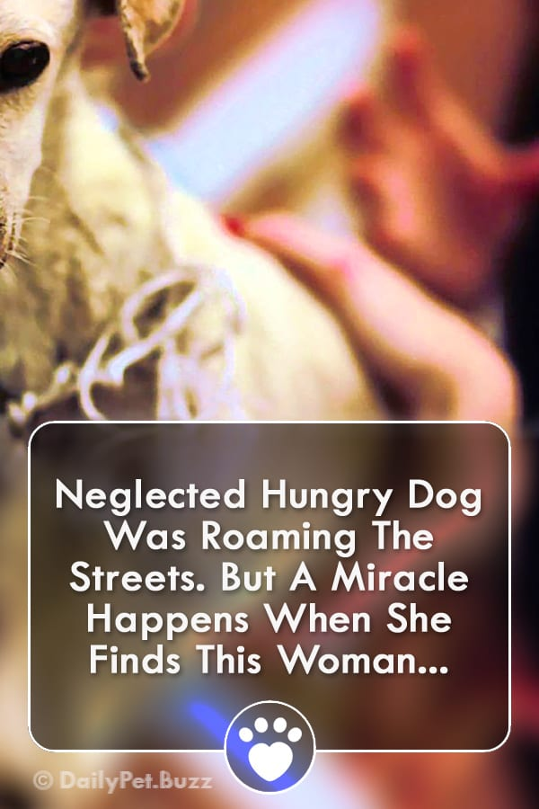Neglected Hungry Dog Was Roaming The Streets. But A Miracle Happens When She Finds This Woman...