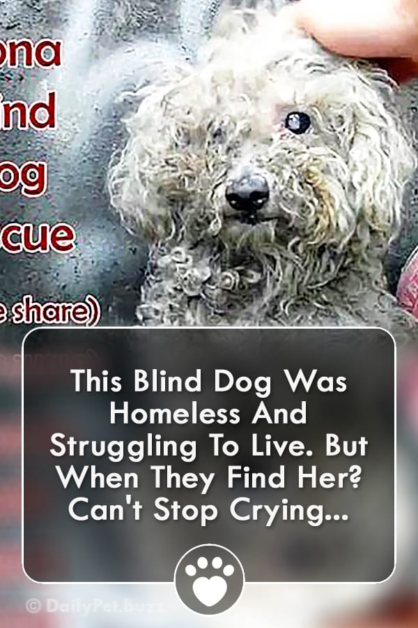 This Blind Dog Was Homeless And Struggling To Live. But When They Find Her? Can\'t Stop Crying...