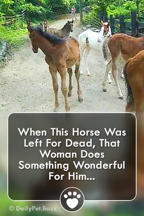 When This Horse Was Left For Dead, That Woman Does Something Wonderful For Him...