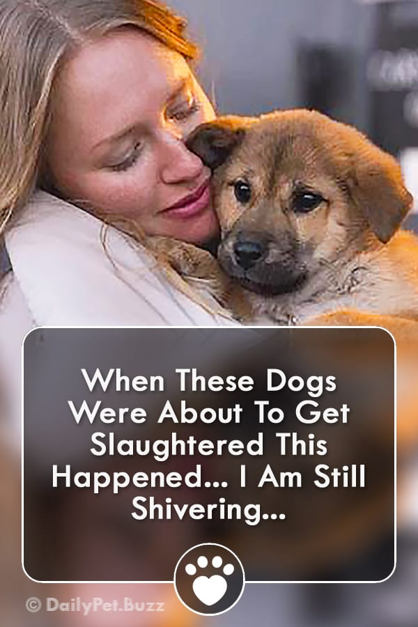 When These Dogs Were About To Get Slaughtered This Happened... I Am Still Shivering...