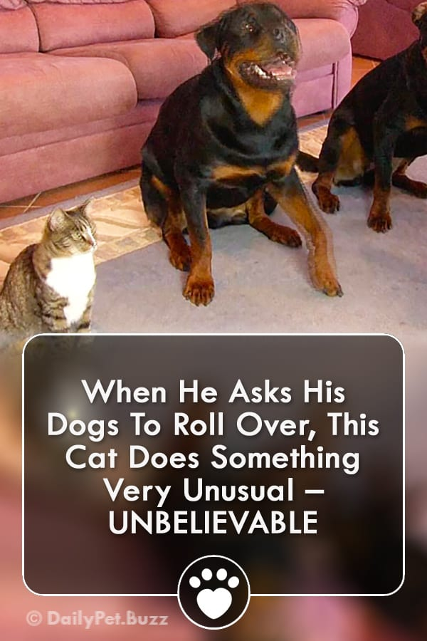 When He Asks His Dogs To Roll Over, This Cat Does Something Very Unusual – UNBELIEVABLE