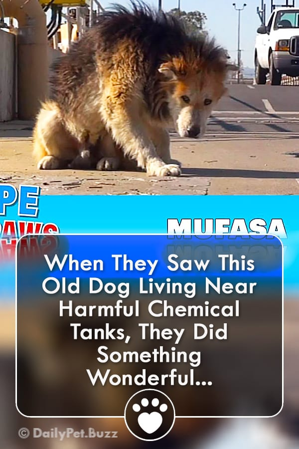 When They Saw This Old Dog Living Near Harmful Chemical Tanks, They Did Something Wonderful...