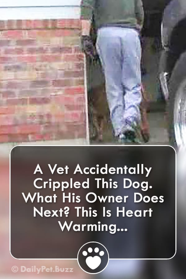 A Vet Accidentally Crippled This Dog. What His Owner Does Next? This Is Heart Warming...