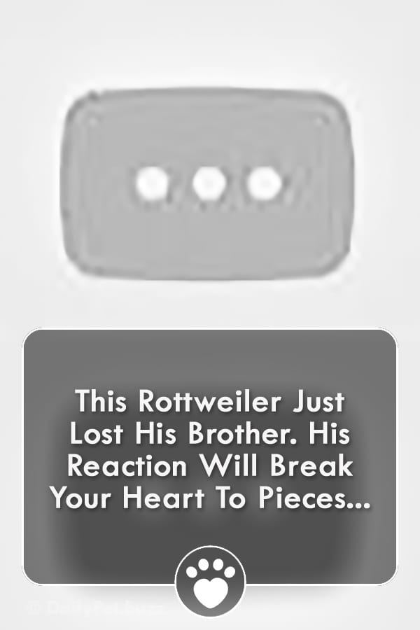 This Rottweiler Just Lost His Brother. His Reaction Will Break Your Heart To Pieces...