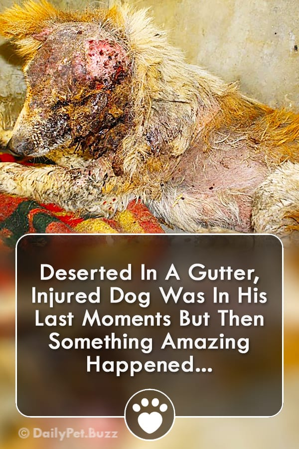 Deserted In A Gutter, Injured Dog Was In His Last Moments But Then Something Amazing Happened...