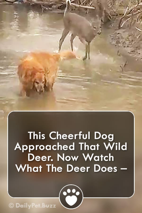 This Cheerful Dog Approached That Wild Deer. Now Watch What The Deer Does –