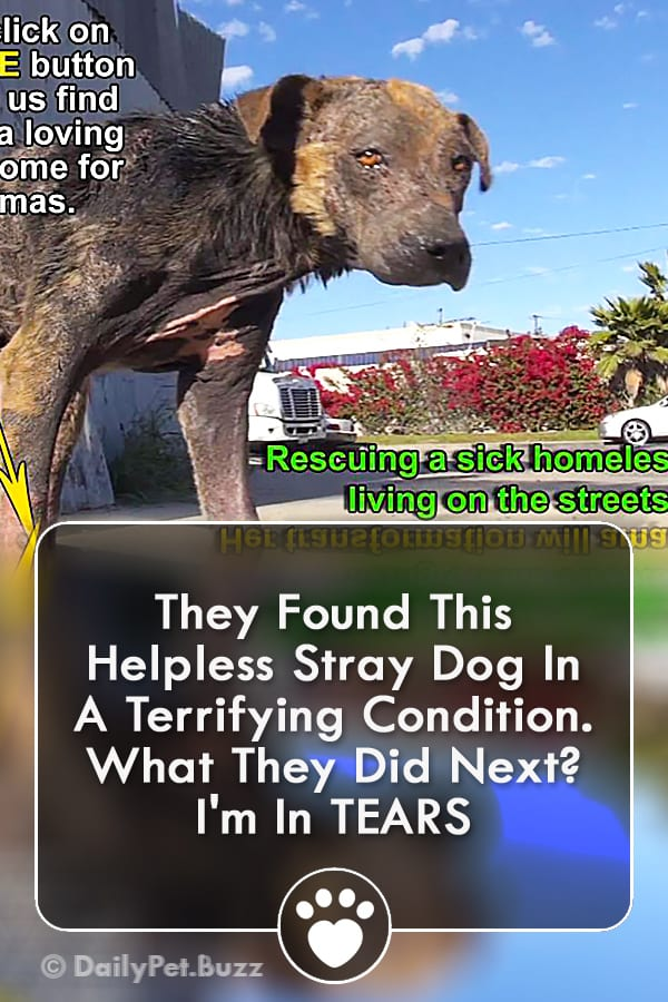 They Found This Helpless Stray Dog In A Terrifying Condition. What They Did Next? I\'m In TEARS