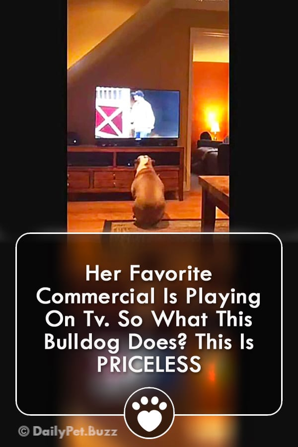 Her Favorite Commercial Is Playing On Tv. So What This Bulldog Does? This Is PRICELESS